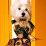 ... Arrive at Your New Home | Dog Treat Recipes, Dog Treats and New Homes