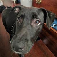 Adopt A Pet :: Buttercup - New Orleans, LA