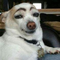 HAHA, I've seen some older women with those eyebrows and with that same look!