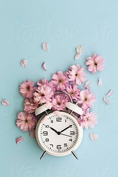 Stock photo of Alarm clock and cherry blossom by RuthBlack is part of Clock wallpaper - Clock Wallpaper, Flower Phone Wallpaper, Pastel Wallpaper, Tumblr Wallpaper, Flower Backgrounds, Wallpaper Backgrounds, Aesthetic Iphone Wallpaper, Aesthetic Wallpapers, Decoration Shabby