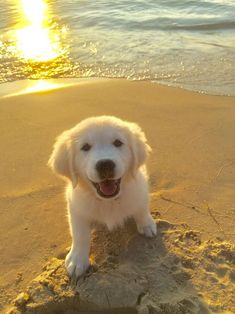 Super Cute Puppies, Cute Baby Dogs, Cute Little Puppies, Cute Little Animals, Dog Baby, Adorable Puppies, Cute Dogs And Puppies, Golden Retriever Names, Baby Golden Retrievers