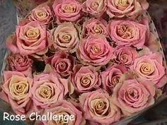 rose challenge picture - Google zoeken