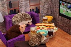 This hedgehog who really knows how to ~get down~ for Monday night football. | 41 Pictures That Will Give You All The Feels