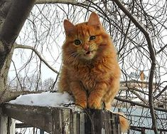 If you're ever feeling down, just remember there's a farm in Siberia full of fluffy cats - Planet of Goodness