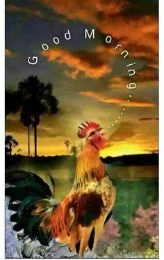 Good morning my love - compartirimagenes. Good Morning Beautiful Pictures, Good Morning Nature, Good Morning Roses, Good Morning My Love, Good Morning Funny, Good Morning World, Good Morning Photos, Good Morning Sunshine, Good Morning Messages