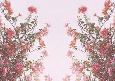 flower tumblr themes - Buscar con Google