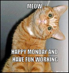 Happy Monday kitty