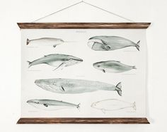 Whales A3 Canvas poster vintage educational chart by ARMINHO,