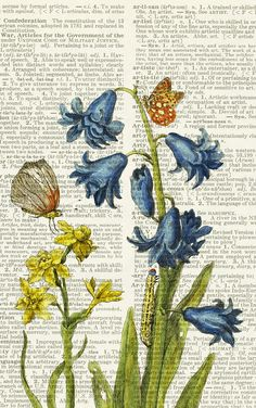1600's botanical artwork XII - printed on page from old dictionary