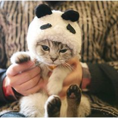 My two favorite things pandas and kitty cats. Kittens In Costumes, Panda Costumes, Bear Costume, Funny Costumes, Baby Animals, Funny Animals, Cute Animals, Funny Cats, Small Animals