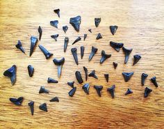 Test Your Shark Teeth Hunting Skills As You Stroll Along The Beautiful Beach In Myrtle