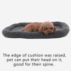 Dog Bed PaddedSpeedy Pet Winter Sleeping Warm Faux Lambswool Cushion Mats Soft Durable Dog Cat Bolster Bed Crate or Kennel Pad Grey >>> To view further for this item, visit the image link. (This is an affiliate link) Cheap Dog Beds, Cheap Pets, Gifts For Pet Lovers, Dog Lovers, Bed Pads, Dog Wash, Fluffy Animals, Pet Life, Dog Crate