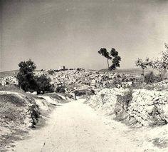 صفورية، فلسطين ١٩٣١  Saffuriyya, Palestine 1931  Saffuriyya, Palestina 1931