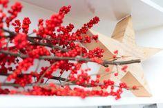 Red berries star Christmas