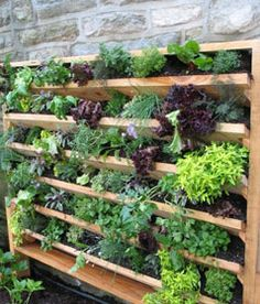 jardin potager vertical