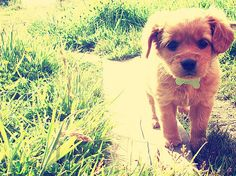 Hey there cutie ;) Can I like take ya for a walk sometime?