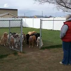 This is funny and amazing! Each dog waits patiently for their name to be called before they run out the gate! Watch for the last dog's antics! Such SMART doggies! Funny Animal Memes, Cute Funny Animals, Funny Animal Pictures, Cute Baby Animals, Funny Dogs, Animals And Pets, Wild Animals, I Love Dogs, Cute Dogs