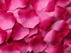 1000 Silk Rose Petals, Berry Pink Ombre Microfiber, Value Pack, wedding decorations, petals for wedding aisle runners, flower girl toss on Etsy, $30.00