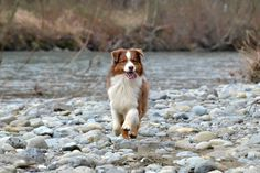 Fall fido fun! #cute #dog in #nature during the #fall season! #woof!