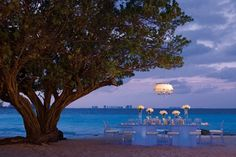 Such a unique tree gives you a great location for wedding events #DreamsSandsCancun