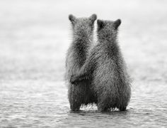 cute picture of two year old brother and sister cubs that are searching for their mother bear that went for salmon fishing. Amor Animal, Mundo Animal, Animal Hugs, Spirit Animal, Wildlife Photography, Animal Photography, White Photography, Photography Office, Professional Photography