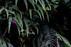 Peruvian Cloud Forest by Katina Houvouras
