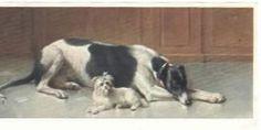 Postcard - Greyhound and Maltese - Reichert - 1910