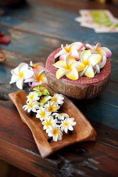 Wooden plumeria in a bowl - great decor idea! Motif Tropical, Tropical Vibes, Tropical Paradise, Tropical Flowers, Hawaiian Flowers, Beach Flowers, Indian Flowers, Tropical Beaches, Paradis Tropical