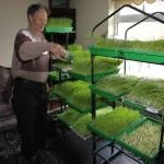 Weizengras gegen Krebs: Triumph der Natur über die Pharmazie