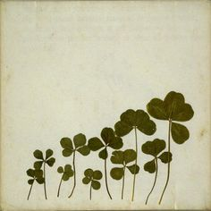Image shared by caitlinnnn! Find images and videos about nature, green and clover on We Heart It - the app to get lost in what you love. Belle Plante, Four Leaves, Luck Of The Irish, Botanical Prints, Graphic, Dried Flowers, Plant Leaves, Flora, Illustrations
