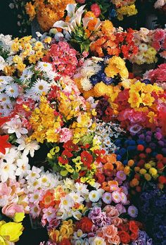 Colorful blooms