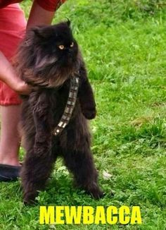 mewbacca @Robin S. Hassinger :D