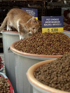 mostlycatsmostly: Taste Tester and Inventory Management -Grand Bazaar - Istanbul, Turkey (by stridli)