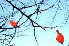 人の世の冷たさが、何んなに冷たいか、人間を勦る事が何であるかをよく知ってゐる吾々は、心から人生の熱と光を願求禮讃するものである。 人の世に熱あれ、人間に光りあれ。-西光万吉(「水平社宣言」より抜粋)-  *水平社・・・部落解放同盟の前身。1922年3月3日京都市の岡崎公会堂で結成。結成の時に採択されたものが、西光万吉(さいこうまんきち)氏という奈良県の被差別部落の青年により執筆された宣言文「水平社宣言」である。