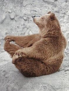 funny yoga bear - or is it the original Yogi Bear? Animals And Pets, Baby Animals, Funny Animals, Cute Animals, Cute Creatures, Beautiful Creatures, Animals Beautiful, Animal Pictures, Cute Pictures