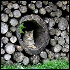 kitty in the woodpile