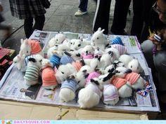 Bunnies in sweaters