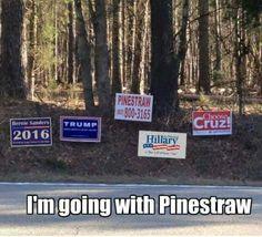 Pinestraw, 2016!