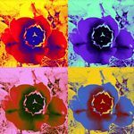 Amanda Elizabeth Sullivan - Buy photos and artworks by Amanda Elizabeth Sullivan and many more photos, posters and art prints on ARTFLAKES. Information Board, Media Icon, Buy Photos, Pumpkin Carving, New Art, Deviantart, Amanda, Art Prints, Halloween