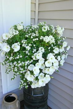 Balcony Plants in White – Tips for a Monochrome Planting … – Flowers Flowers Balcony Flowers, Balcony Plants, Outdoor Flowers, Flower Planters, Garden Planters, Flower Pots, Hanging Flower Baskets, Container Flowers, Container Plants