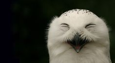 smiling snowy owl...how cute!