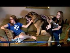 South Bend Police and officer retire as partners K9 Officer, Police Dogs, South Bend, Service Dogs, Retirement, Support Police, Youtube, Elizabeth Taylor, Animals