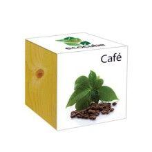 EcoCube - Piante in cassetta - Caffé