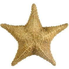 Vintage Nautical Starfish (1,395 MXN) ❤ liked on Polyvore featuring home, home decor, decorative objects and filler