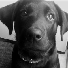Puppy,  Reminds me of Bella the Demolition Dog.