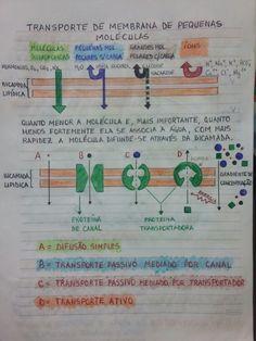 Transporte de Pequenas Moléculas Através da Membrana