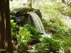 just a thought for water flowing into the backyard stream......one of these days....More water in the shade.