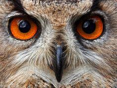 """""""The Eyes"""""""