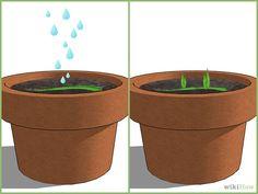 How to propagate Aloe Leaf