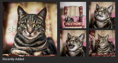 Shutterstock is a global marketplace for artists and creators to sell royalty-free images, footage, vectors and illustrations. We want to see the world through your eyes. Royalty Free Images, Things To Sell, Cats, Illustration, Artist, Animals, Gatos, Animales, Animaux